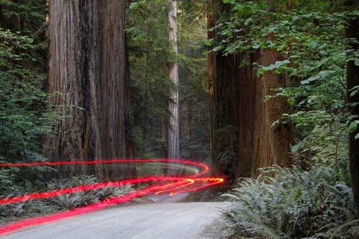 Car lights on a bumpy road, Jedediah Redwoods, California Coast, California, USA : Stock Photo