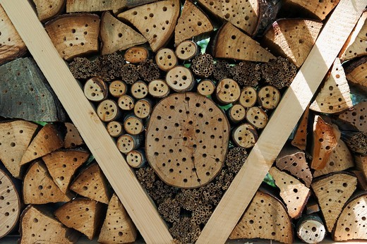 Nesting aid or insect houses for wild bees and other insects with wood and elderberry stems : Stock Photo