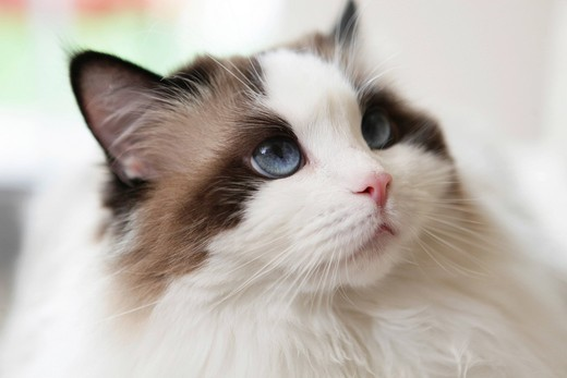 Cat, portrait : Stock Photo