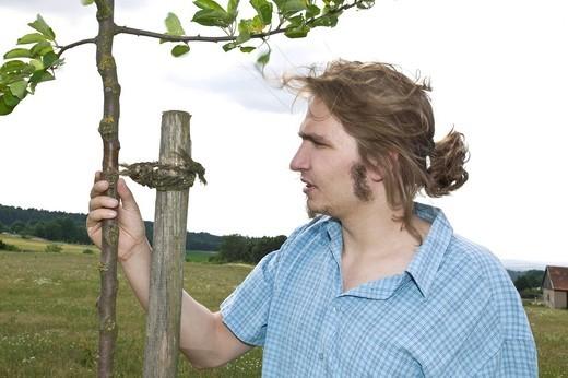 Farmer examining a young fruit tree : Stock Photo
