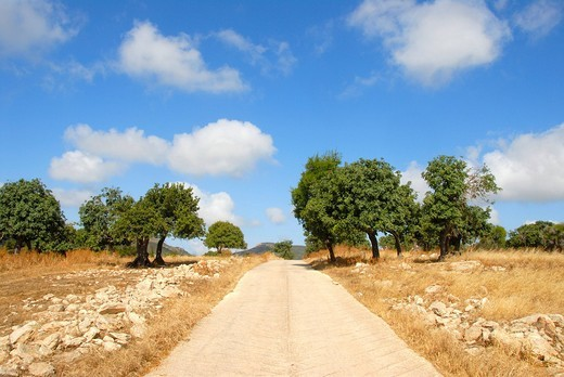 Stock Photo: 1848R-519975 Straight path through the landscape, Carob Trees Ceratonia siliqua, near Neo Chorio, Akamas, Southern Cyprus, Republic of Cyprus, Mediterranean Sea, Europe