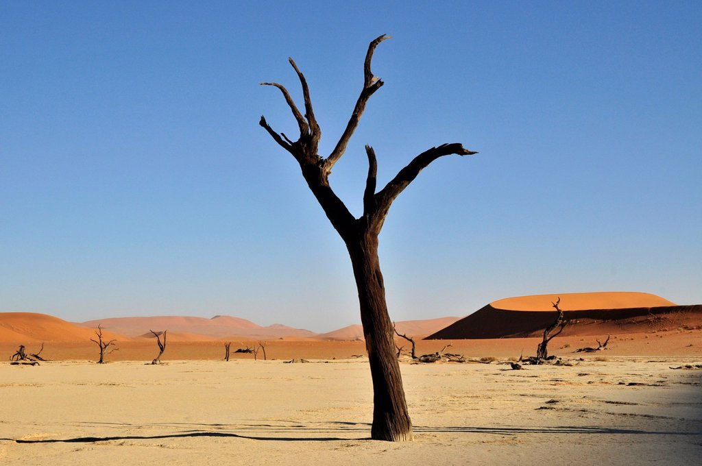 Dead tree in the Dead Vlei, Deadvlei clay pan in the morning light, Namib Desert, Namib_Naukluft National Park, Namibia, Africa : Stock Photo