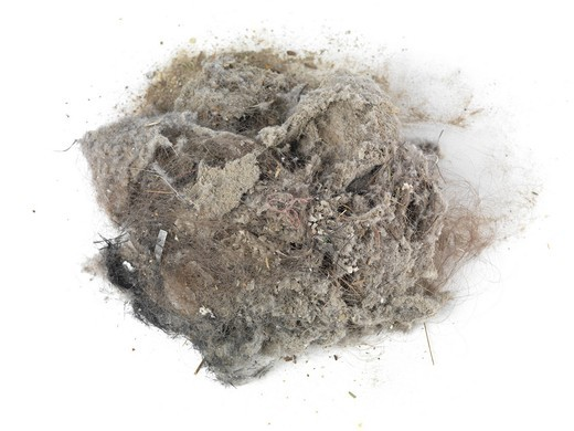 Pile of dust and hairs collected with a vacuum cleaner : Stock Photo