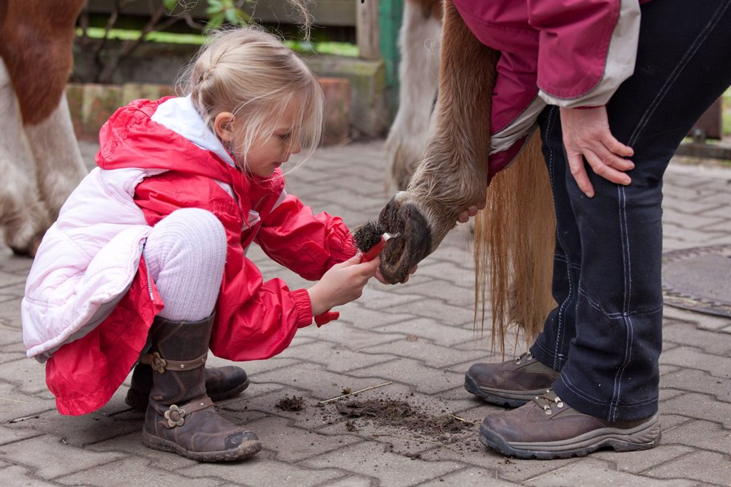 Stock Photo: 1848R-521871 Young girl cleaning the hooves of a pony