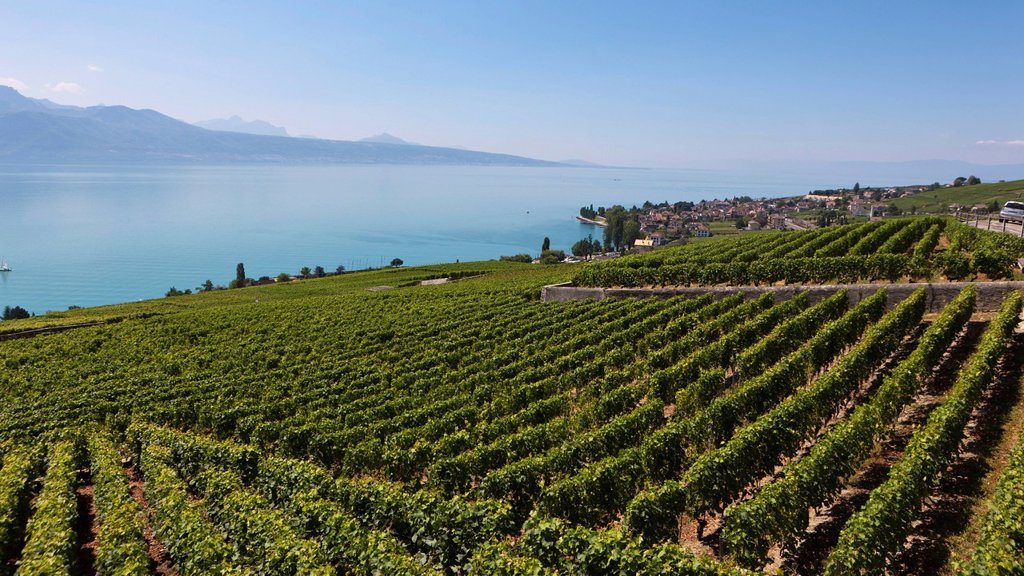 Stock Photo: 1848R-522291 View across the vineyards towards the village of Cully, Lake Geneva at back, Canton Vaud, Lake Geneva, Switzerland, Europe