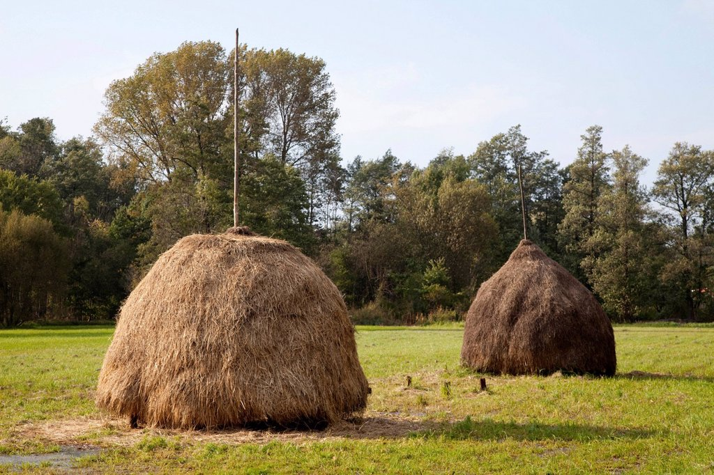 Stock Photo: 1848R-522567 Haystacks, Lehde, Spreewald region, Brandenburg, Germany, Europe
