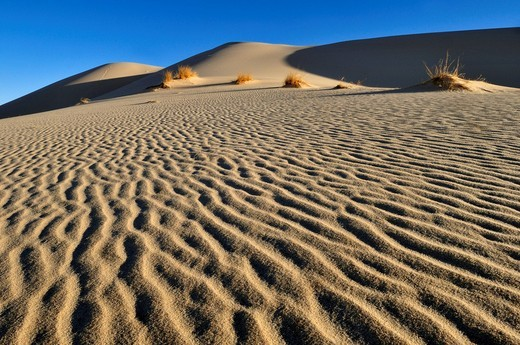 Sand dune of Erg Tihodaine, Wilaya Tamanrasset, Algeria, Sahara, North Africa, Africa : Stock Photo