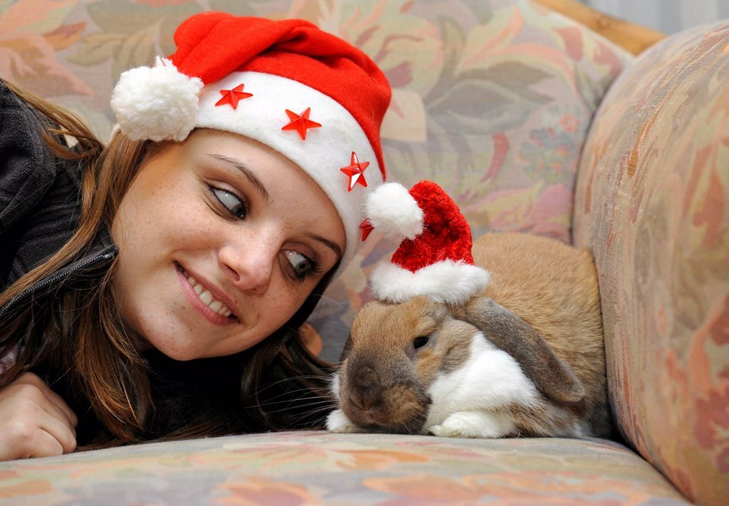 Young woman with a dwarf lop bunny or rabbit Oryctolagus cuniculus, wearing Santa hats, love of animals : Stock Photo