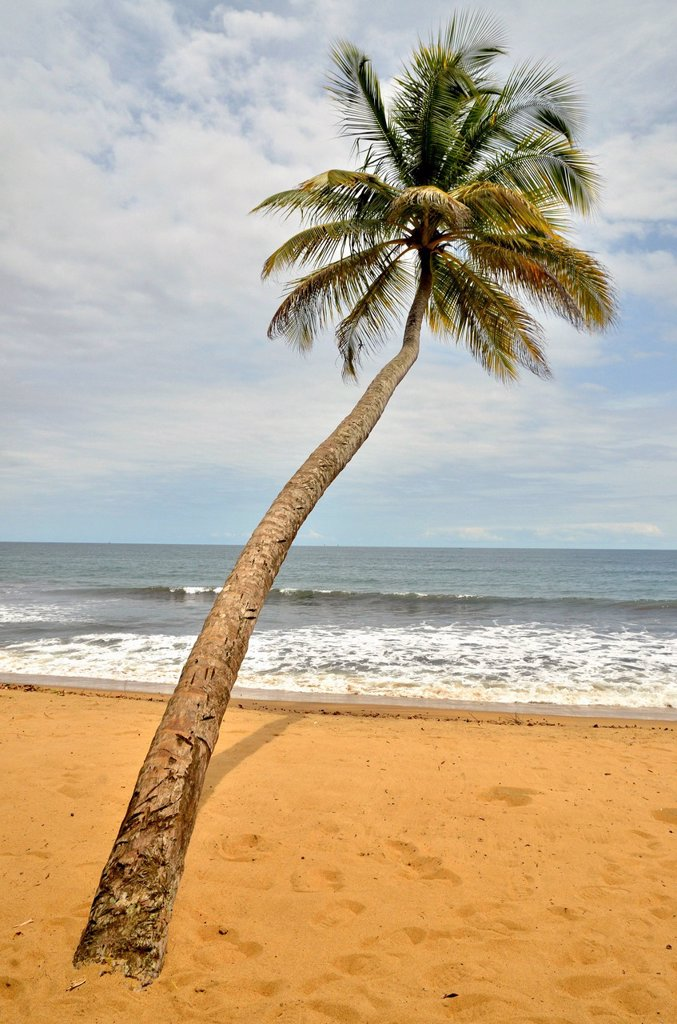 Palm tree on the beach in Kribi, Cameroon, Central Africa, Africa : Stock Photo