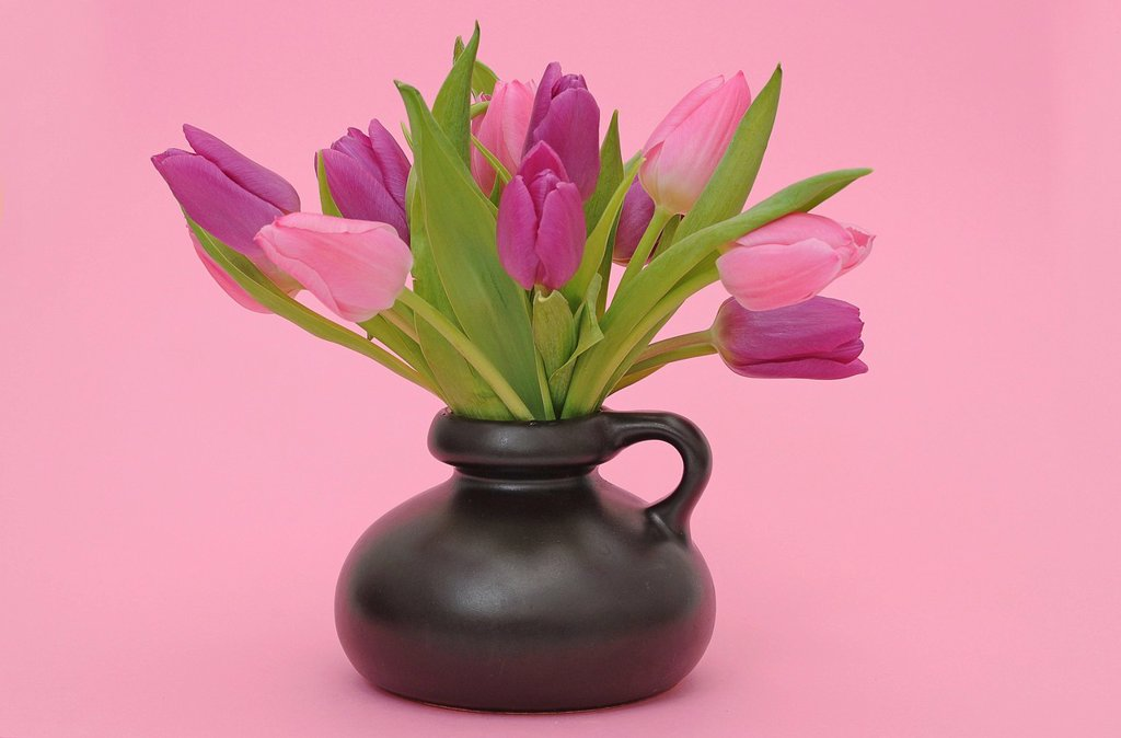 Bouquet of Tulips Tulipa in a vase : Stock Photo