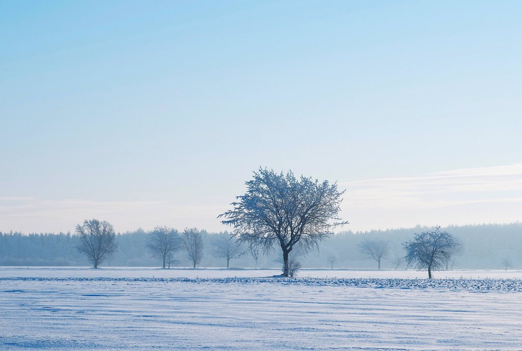 Stock Photo: 1848R-636462 Winter landscape, Lower Saxony, Germany, Europe