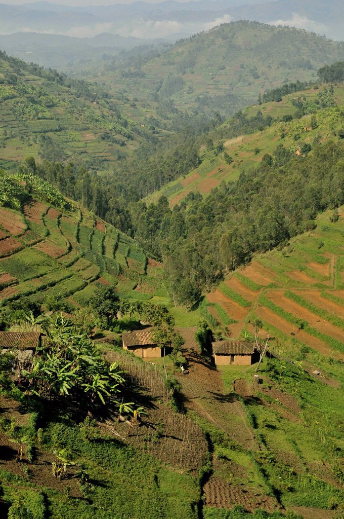 Typical hilly landscape near Busengo, Rwanda, Africa : Stock Photo