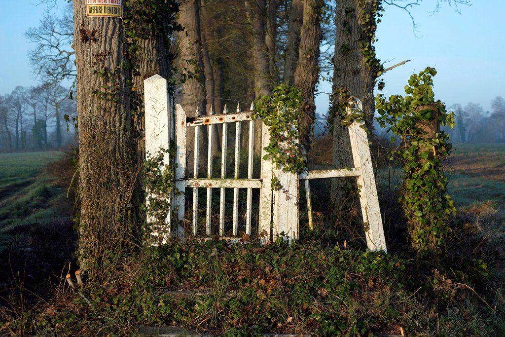 Old white wooden gate, dilapidated entrance to a country estate, overgrown avenue, near Bayeux, Normandy, France, Europe : Stock Photo