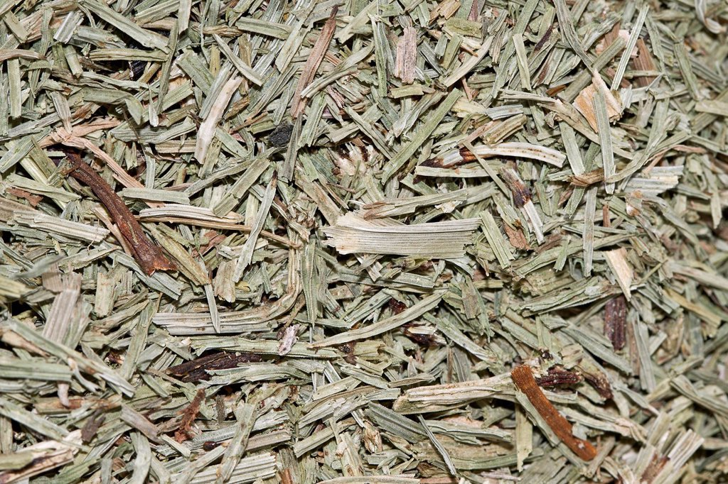 Horsetail tea, organic tea : Stock Photo