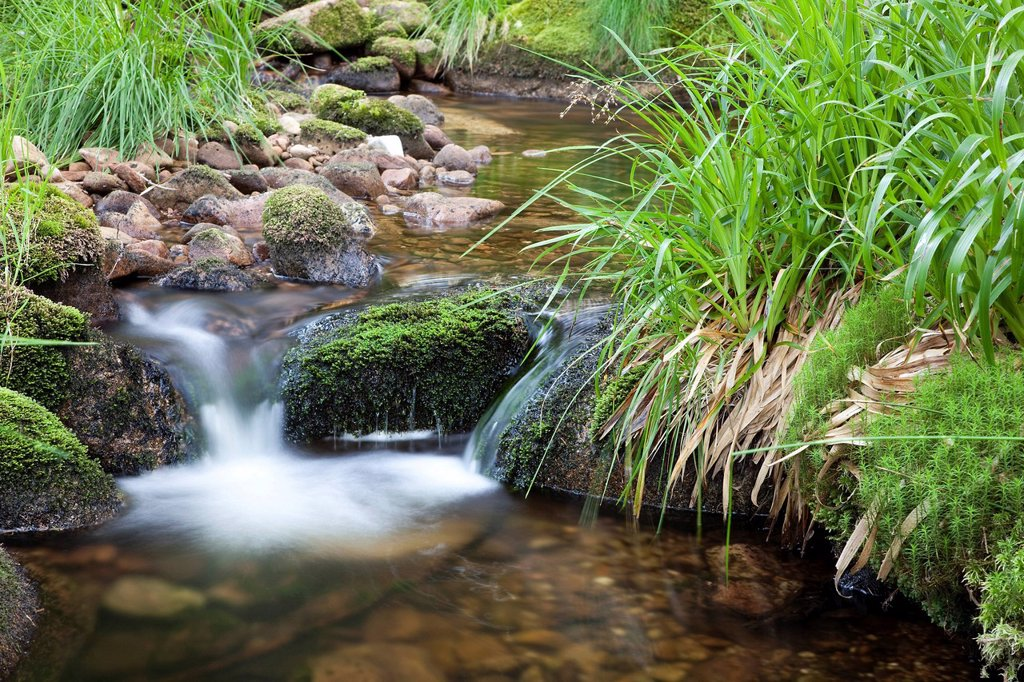 Idyllic mountain creek in the Black Forest, Baden_Wuerttemberg, Germany, Europe : Stock Photo