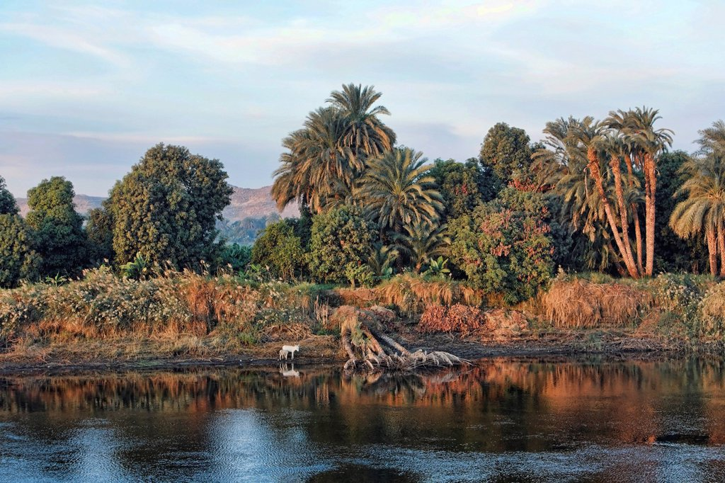Bank of the Nile, Egypt, Africa : Stock Photo