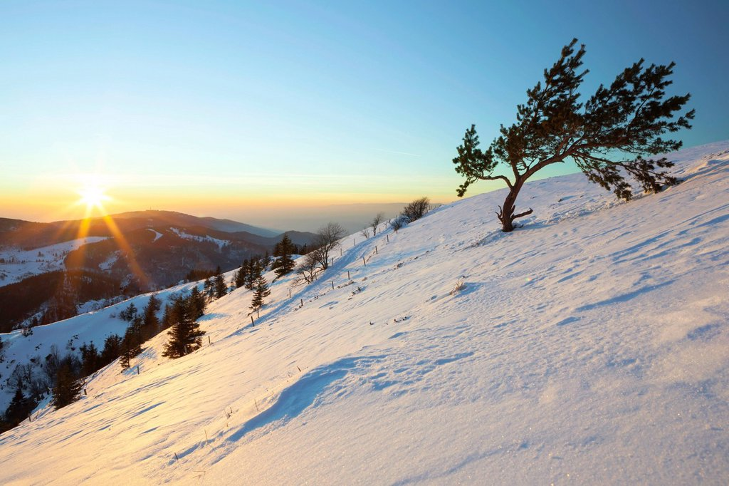 Distance views to the Swiss Alps in the evening light, sunset, from Mt Belchen in the Black Forest in winter, Baden_Wuerttemberg, Germany, Europe, PublicGround : Stock Photo
