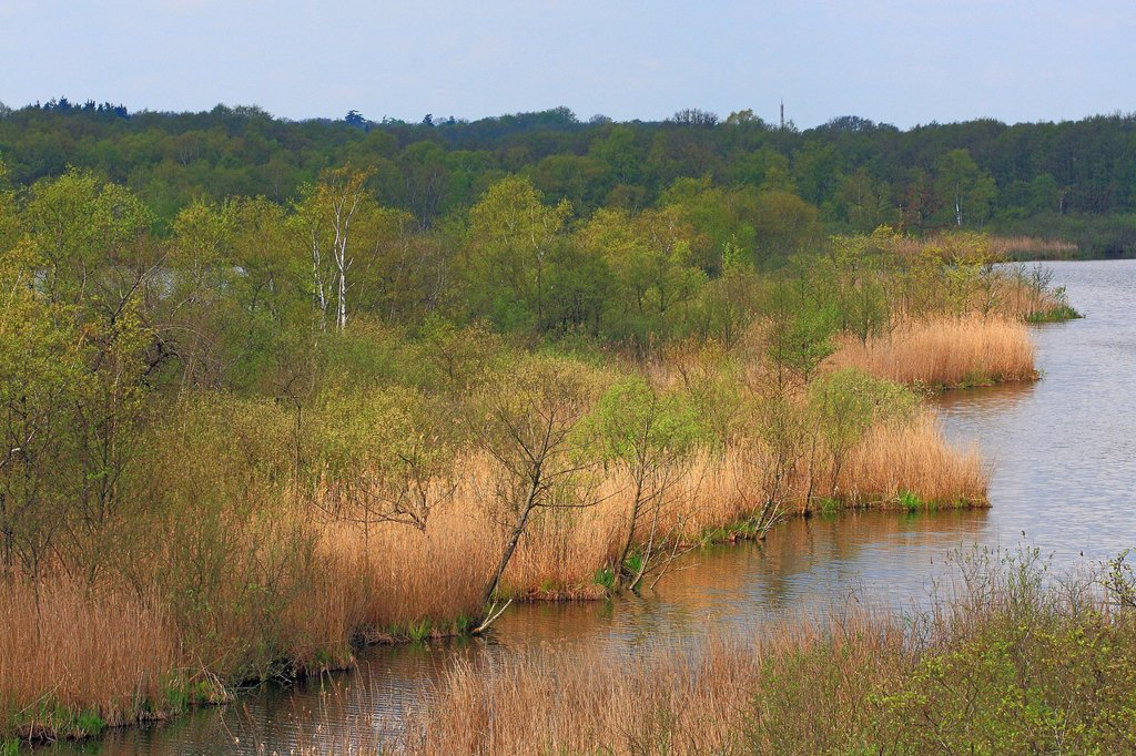 Stock Photo: 1848R-645000 Nature reserve with a water_bayou and natural reeds on the bank in spring, Mecklenburg Lake District, Mecklenburg_Western Pomerania, Germany, Europe