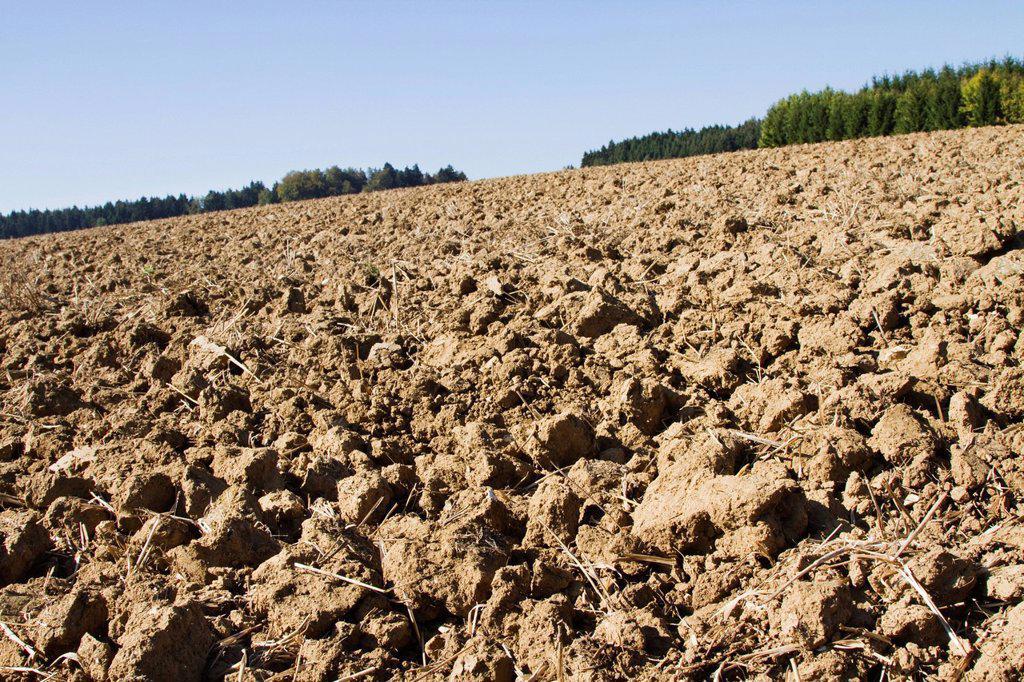Field in autumn : Stock Photo