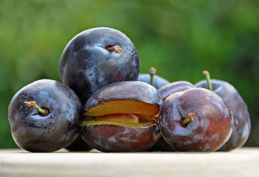 Stock Photo: 1848R-727028 Fresh plums