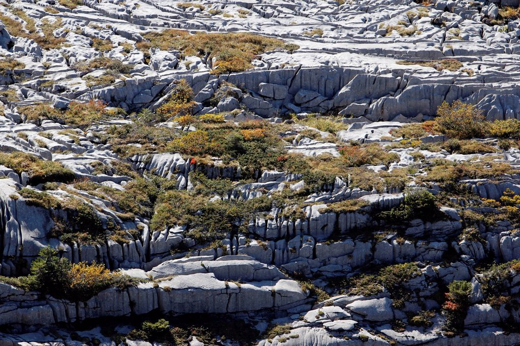 Stock Photo: 1848R-734424 Limestone pavements, karst landforms, geology on Gamser Rugg Mountain, Toggenburg, Canton of St. Gallen, Switzerland, Europe, PublicGround