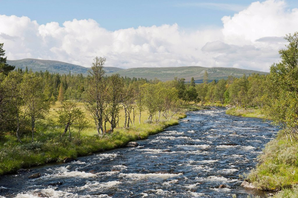 Wilderness, Groevlan river with rapids, Langfjaellet Nature Reserve near Groevelsjoen, Dalarna province, Sweden, Scandinavia, Northern Europe, Europe : Stock Photo