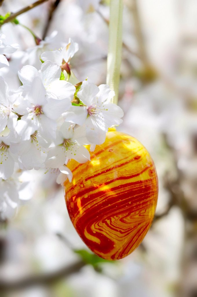 Stock Photo: 1848R-736441 Easter egg and cherry blossoms