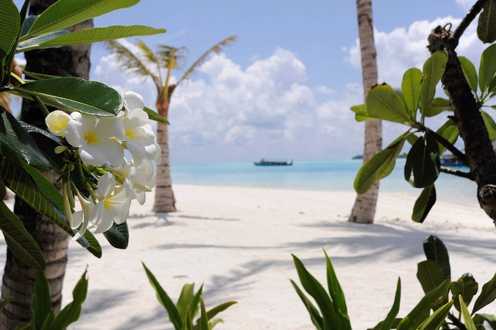 Stock Photo: 1848R-738879 Tropical beach with palm trees and blossoming shrubs, Maldives, Indian Ocean