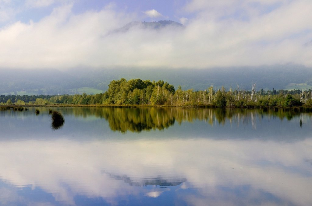 Early morning with fog on moorland ponds, bog on the edge of the Alps, Nicklheim, Bavaria, Germany, Europe : Stock Photo
