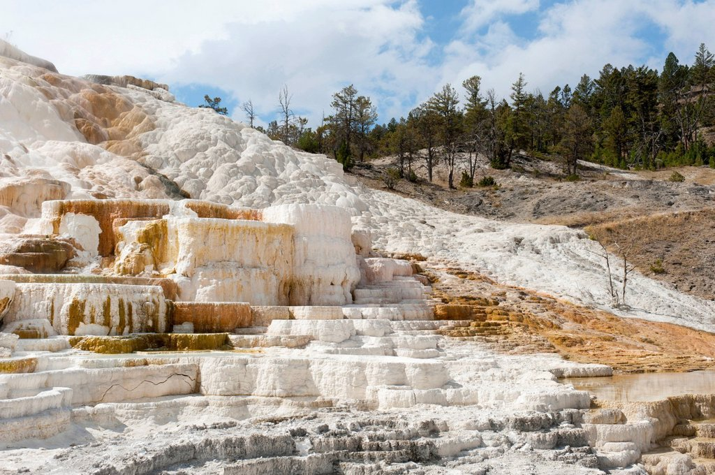 Stock Photo: 1848R-749700 Geomorphology, white and yellow limestone sinter terraces, Palette Spring, Mammoth Hot Springs, Yellowstone National Park, Wyoming, USA, United States of America, North America