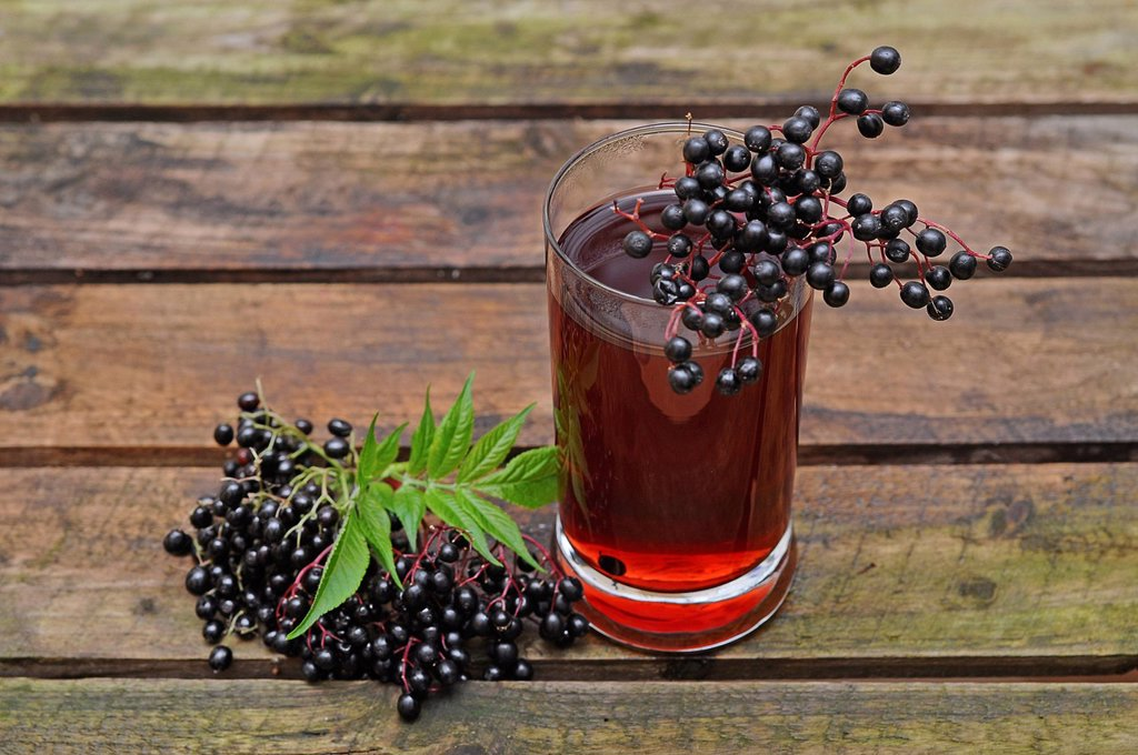 Elderberry juice, elderberries Sambucus nigra : Stock Photo