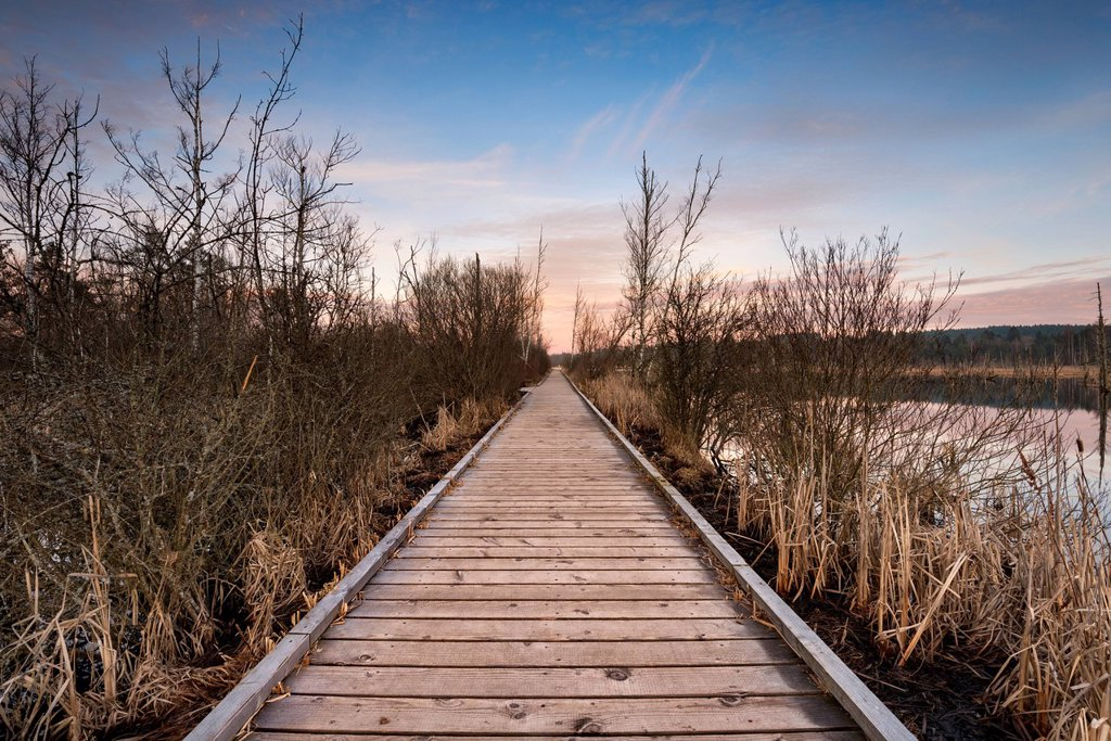 Stock Photo: 1848R-774077 Boardwalk in Schwenninger Moos Nature Reserve