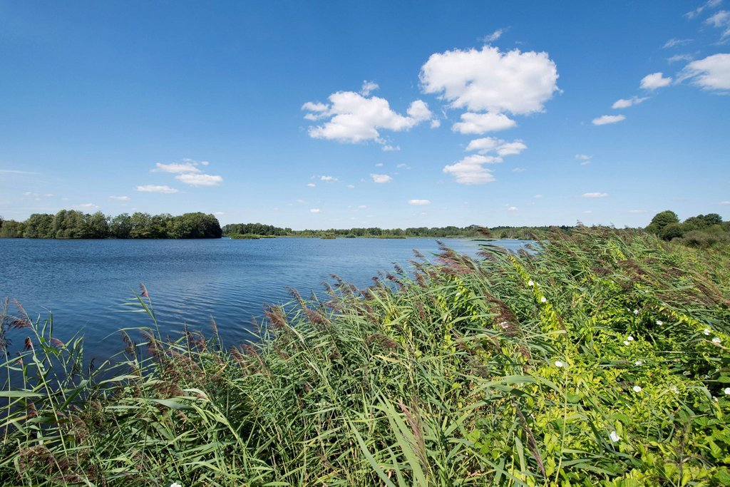 Stock Photo: 1848R-819138 Pond landscape, Meißendorf Lakes Nature Reserve, Meißendorf, Lower Saxony, Germany