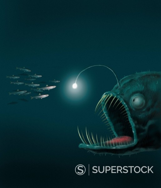 Fish with light on head luring school of fish for dinner : Stock Photo