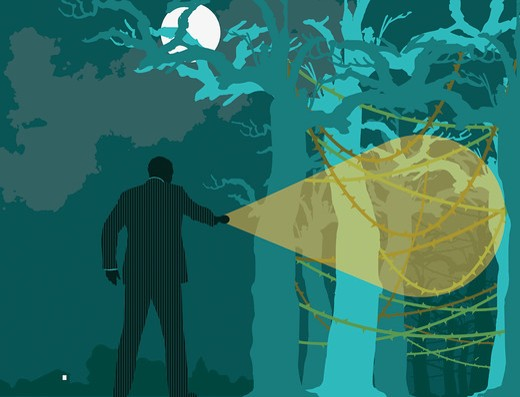 Businessman searching forest at night : Stock Photo