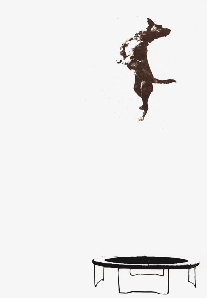 Stock Photo: 1849-540 Dog jumping on trampoline