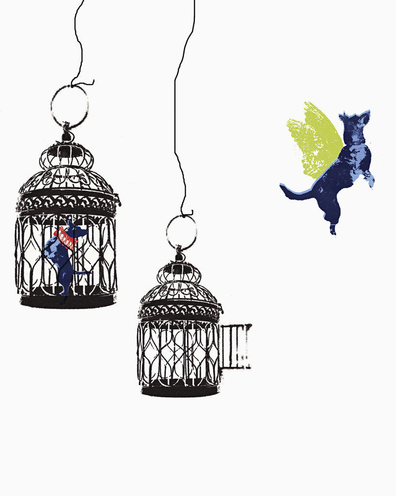 Stock Photo: 1849-550 Flying dog escaping from birdcage