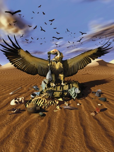 Vulture picking over skeletal remains in desert : Stock Photo