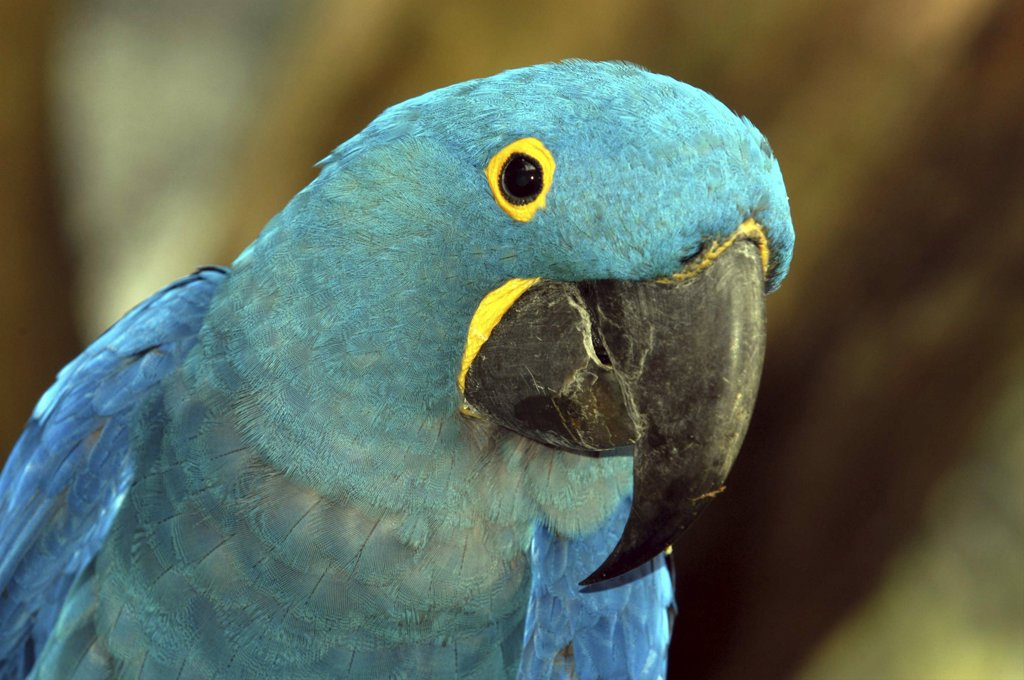 Singapore, Jurong, Jurong Bird Park. Portrait Of A Green And Blue Parrot : Stock Photo