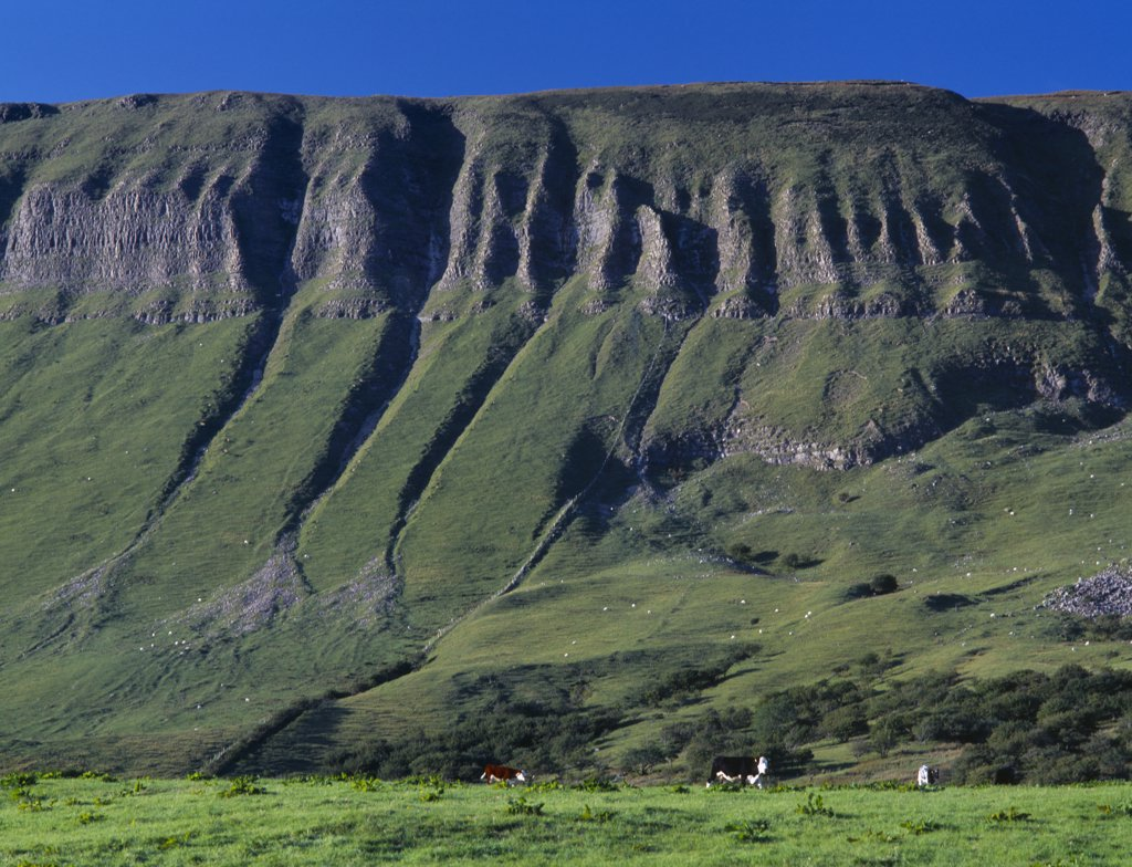 Stock Photo: 1850-11263 Ireland, Sligo, Ben Bulben, View Toward The Flat Topped Limestone Hill With Eroded Folds And Gullys.  Cattle Grazing At The Base