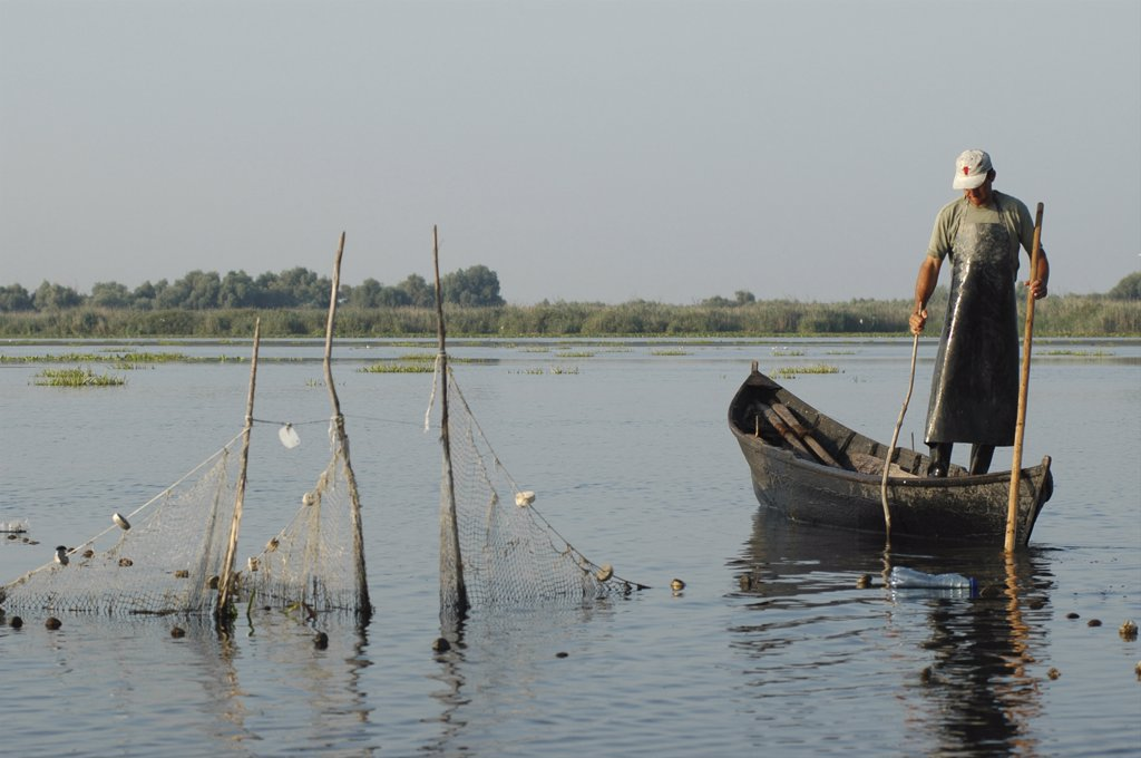 Romania, Tulcea, Danube Delta Biosphere Reserve, Professional Fisherman In Canoe On Lake Isac Checking His Nets : Stock Photo