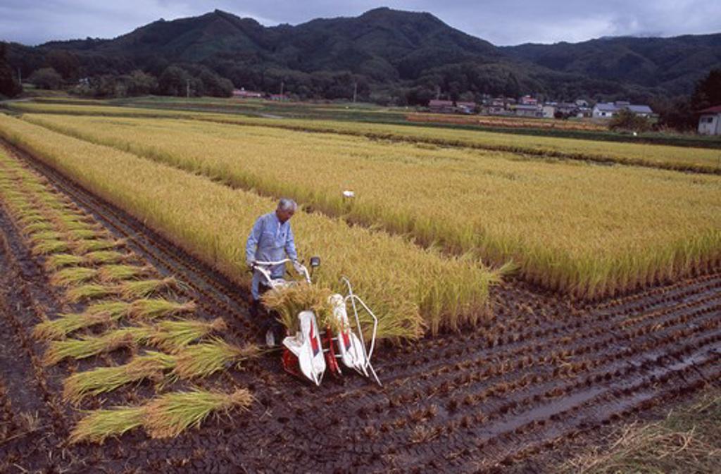 Stock Photo: 1850-11886 Japan, Honshu, Densho En, Male Farm Worker Harvesting Rice Fields With A Hand Held Machine