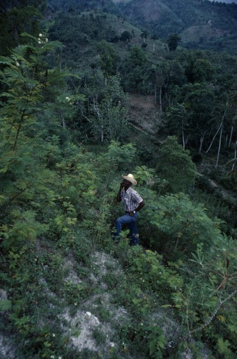 Haiti, Environment, Farmer In Deforested Hill Region. : Stock Photo