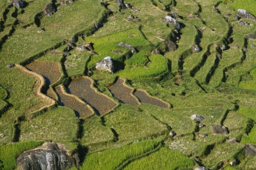 Stock Photo: 1850-13746 Indonesia, Toraja, Aerial View Over Rice Field.