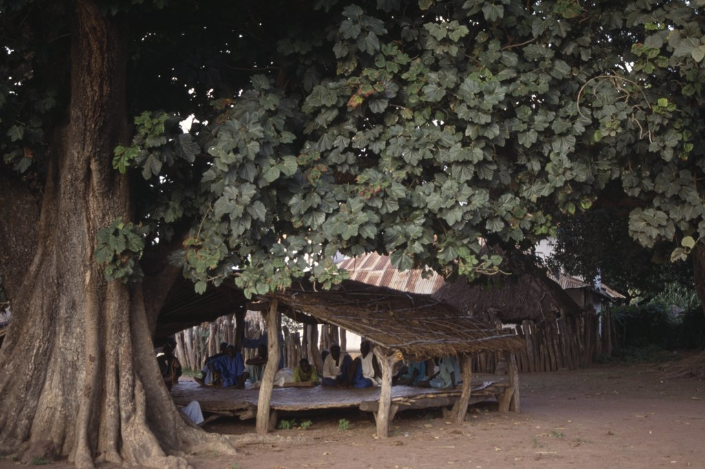 Stock Photo: 1850-15445 Gambia, People, Village Histories Told By Story Teller Griot Under The Biggest Tree In The Village.
