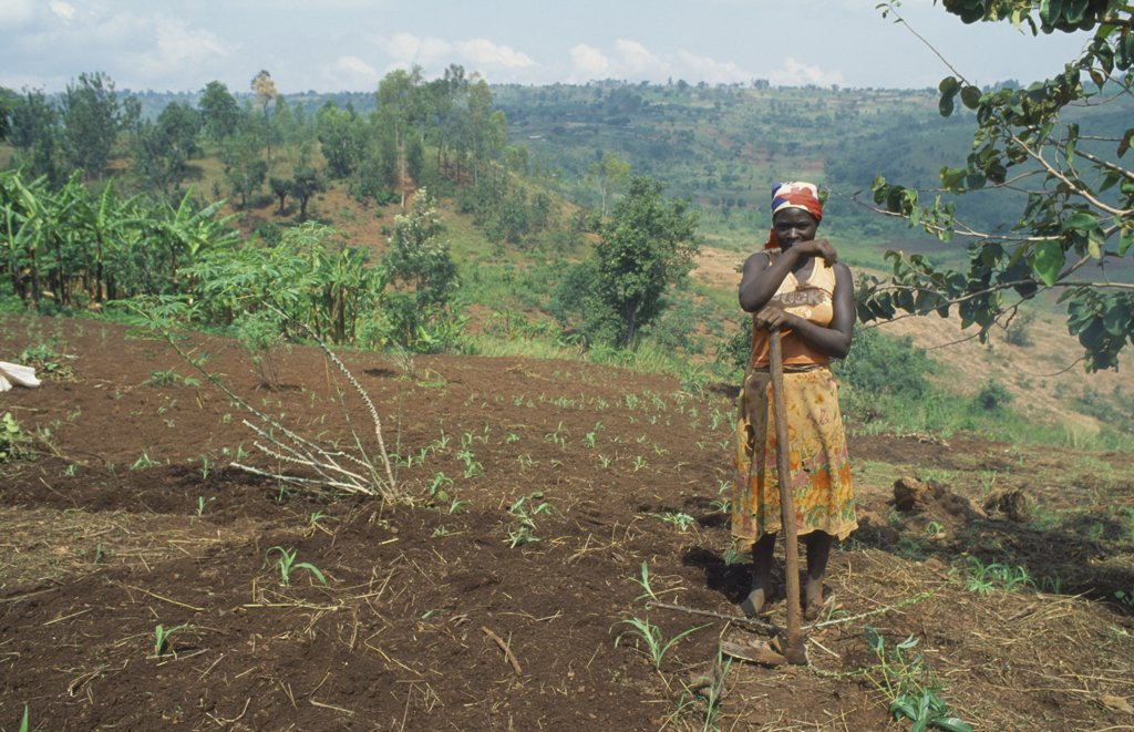 Burundi, Kirundo Province, Tribal People, Burundian Returnee From Rwanda Cultivating Land Using Fertilizer Supplied By The Eec. : Stock Photo