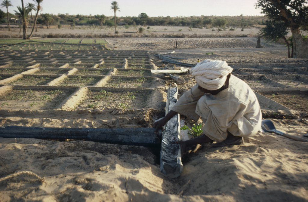 Stock Photo: 1850-16165 Sudan, Kordofan Province, Agriculture, Man Constructing Irrigation Channels For Cultivated Plots.