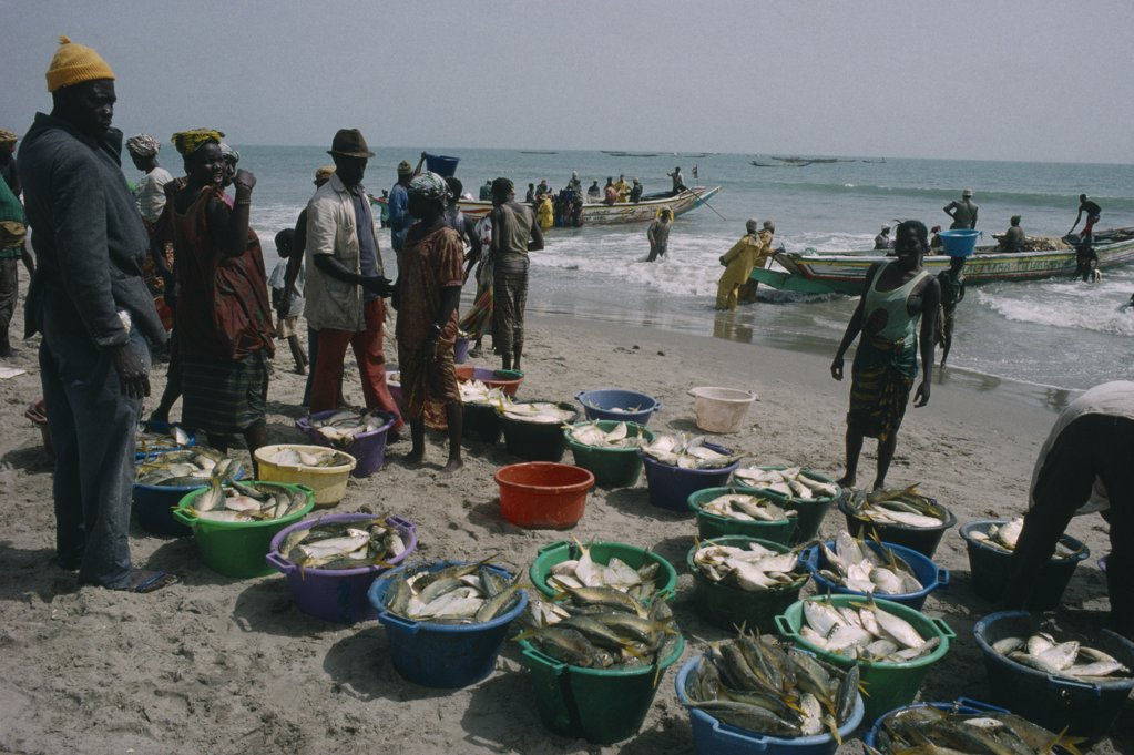 Stock Photo: 1850-16439 Gambia, Industry, Fishing, Fishing Village With People On The Beach With Buckets Of  The Days Catch Of Fish And Boats On Shoreline.