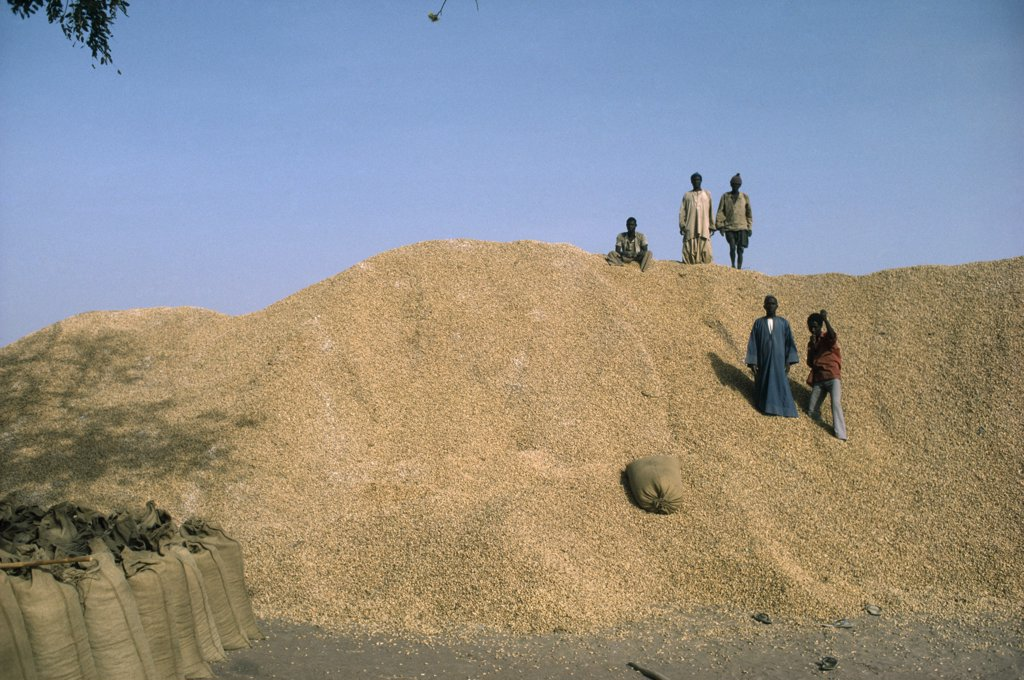 Gambia, People, Children, Children On Top Of Groundnut Heap : Stock Photo