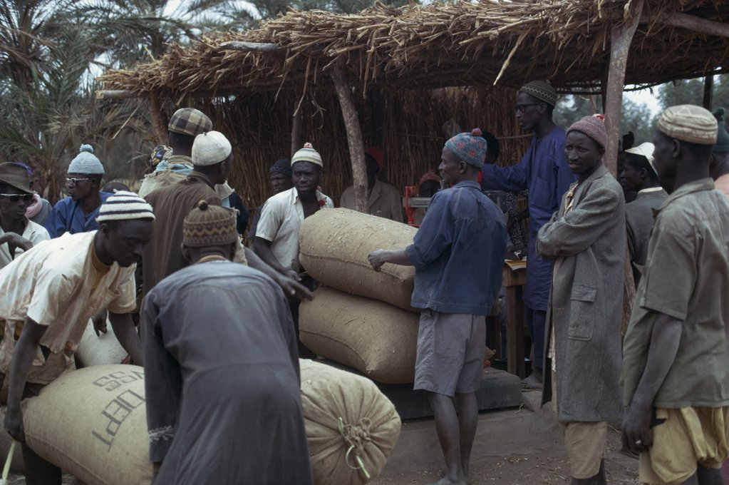 Stock Photo: 1850-16508 Gambia, Markets, Traders With Sacks At Groundnuts Buying Station